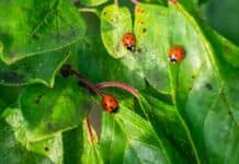 Insects That Can Help or Harm Your Garden