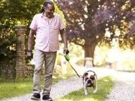 3 Surefire Ways To Socialize Your Dog
