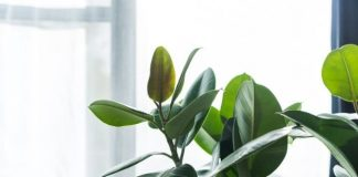 Little Ways To Make Your Home Environmentally Friendly