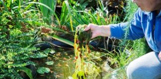 How To Combat Algae Growth in a Residential Pond